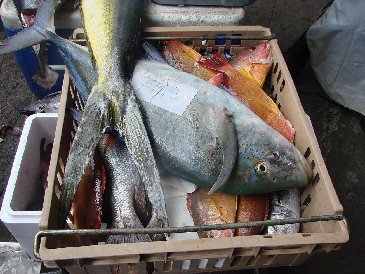 Freshwater fish dace - Kumu