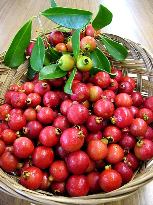 Strawberry Guavas by the Baskets – Tasty Island