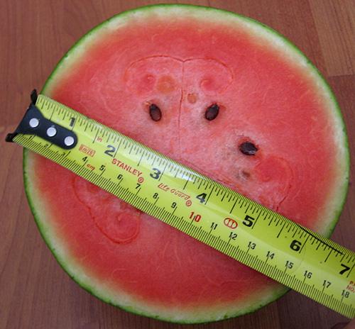 Thai Watermelon from Aloun Farms – Tasty Island