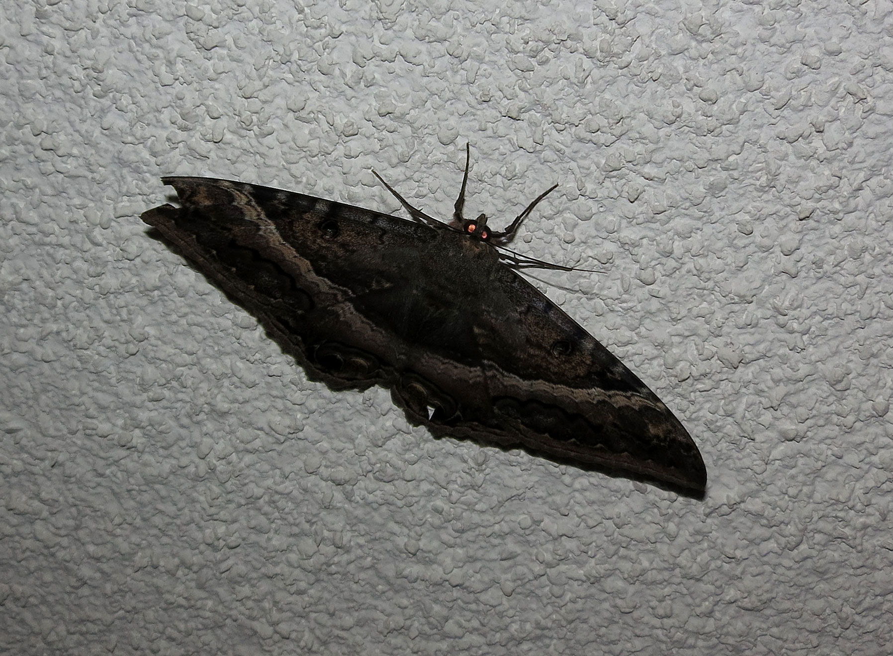 Small Moths In Bedroom The Moth Superstition Tasty Island