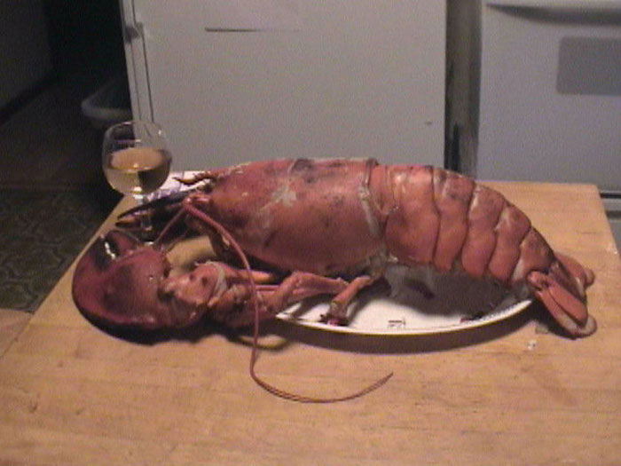 Friday night cooked live 7 5 pound lobster dinners wine toast almost 3